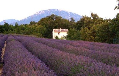 Atelier für Etelka in der Provence